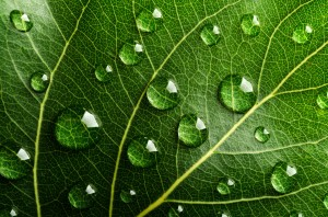Leaf-with-Droplets-Lower-File-Size